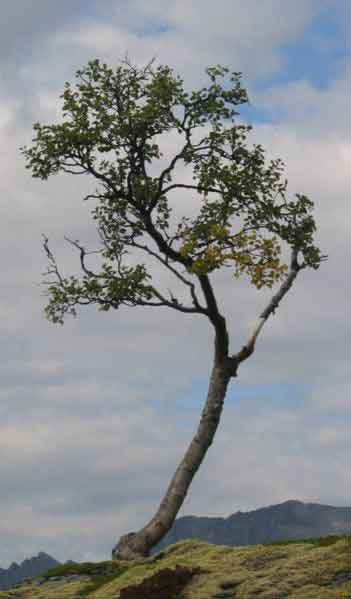Tree Bark Natural Remedy For Urinary Infections