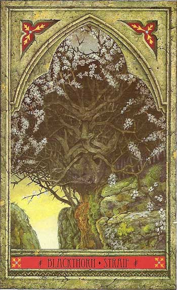The Green Man Tree Oracle by John Matthews & Will Worthington