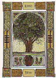 The Celtic Tree Oracle by Liz and Colin Murray