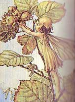 The Hazel Fairy by Cicely Mary Barker