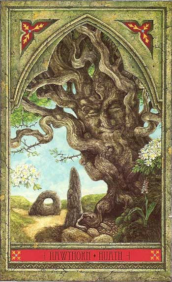 Green Man Tree Oracle HAWTHORN