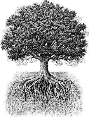 Zeus Oak Tre... Oak Tree Symbolism Marriage