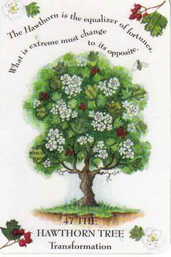 celtic astrology hawthorn
