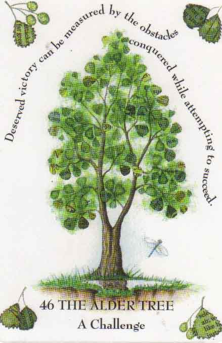 Celtic Calendar Wood : The goddess tree grows alder march april