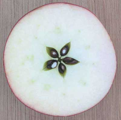 Image result for apple seed