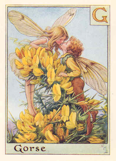 Gorse Fairy by Cicely Mary Barker