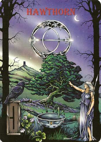 Ogham the Celtic Oracle HAWTHORN