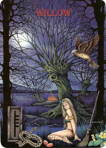 Ogham The Celtic Oracle Willow