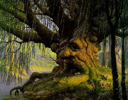 Cool Willow Tree Pictures